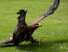 Klassenfahrt in Kemberg: Falken, freche Nager und Wasserspaß